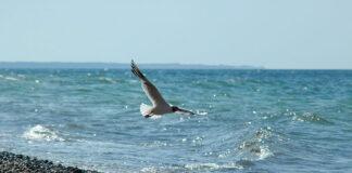 Jak zaplanować idealne wakacje nad polskim morzem