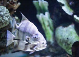 Elegancki zestaw akwariowy